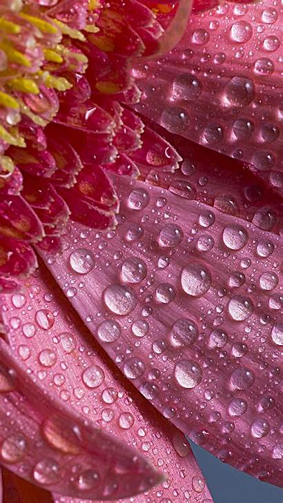 Flowers Droplets Wallpapers Px