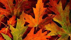 Fall, Leaves, Desktop, Wallpaper, 59, Images