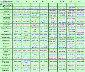 planting schedule schedule for planting a vegetable
