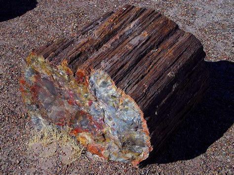 petrified wood looks like gemstones minerals gems