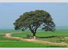 Village Nature of Bangladesh Ariful Haque Bhuiyan Flickr