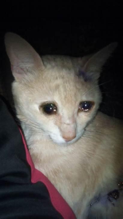 Cat Meme Crying Wallpapers Sad