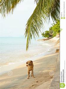 Dogs Standing On Shore Royalty-Free Stock Image ...