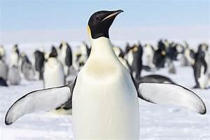 Flipper Definition - Do Penguins Have Wings?