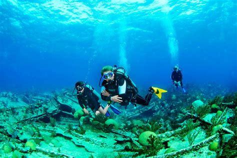 images  scuba diving  pinterest sharks