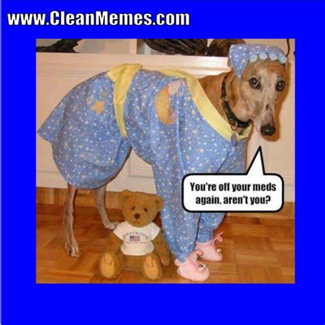 Clean Animal Memes - clean animal memes dog memes clean memes the best the most online