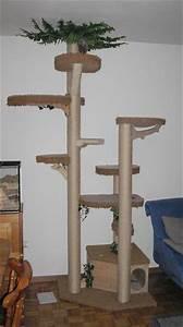 Kratzbaum Selber Bauen Zubehör : kratzbaum von decker kratzb ume katzenforum mietzmietz das forum ber katzen ~ Frokenaadalensverden.com Haus und Dekorationen