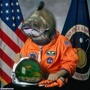 Astronaut Cat Fish Pictures - Freaking News
