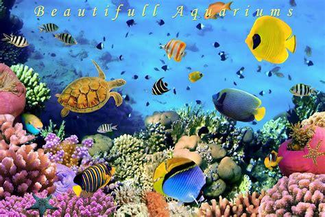 Animated Aquarium Wallpaper For Android - live fish tank wallpaper wallpapersafari