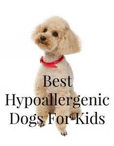 best hypoallergenic dogs for kids dogvills