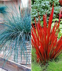 Ziergräser Im Garten Bilder : ziergr ser kollektion rot und blau ziergr ser bei baldur garten ~ Sanjose-hotels-ca.com Haus und Dekorationen