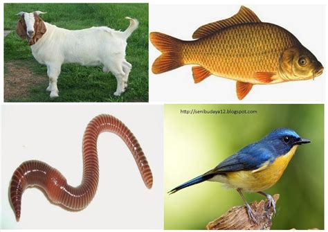 KLIPING Hewan Vertebrata dan Invertebrata beserta ...