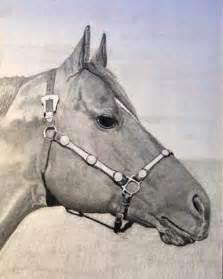 Horse Head Drawings