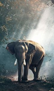 Elephant iPhone Wallpaper (74+ images)
