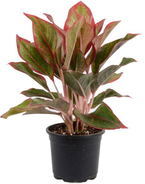 plants for bathroom india bring new energy to your bathroom with humidity loving