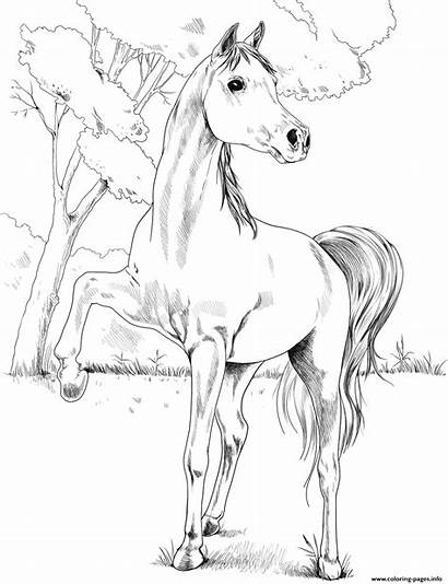 Coloring Arabian Egyptian Horse Pages Printable