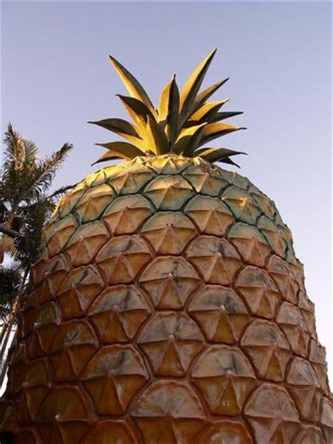 big pineapple nambour