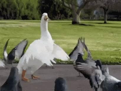 Friday Happy Dancing Birds Things Dance Animal