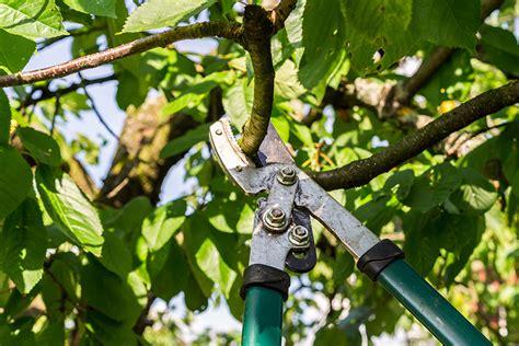 Tipps Für Den Winterschnitt Von Baum Und Hecke ǀ Husmann Blog