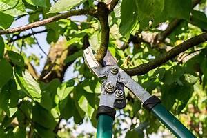 Bäume Und Sträucher Für Den Garten : tipps f r den winterschnitt von baum und hecke husmann blog ~ Lizthompson.info Haus und Dekorationen