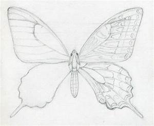 7 Best Images of Easy To Draw Butterfly Wings - Butterfly ...