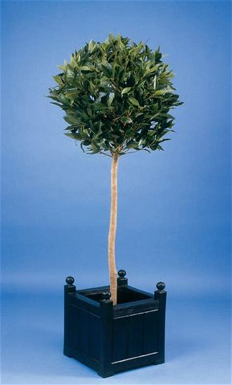where can i purchase artificial trees on cape cod artificial silk bay tree just artificial