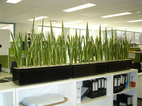 artificial plants mother in law tongue australian interior landscapes