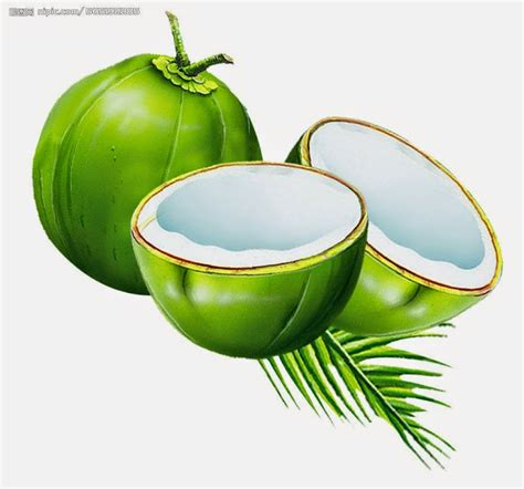 kelapa clipart clipground