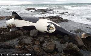 Unnecessary Orca Deaths: What We're Doing for Killer ...