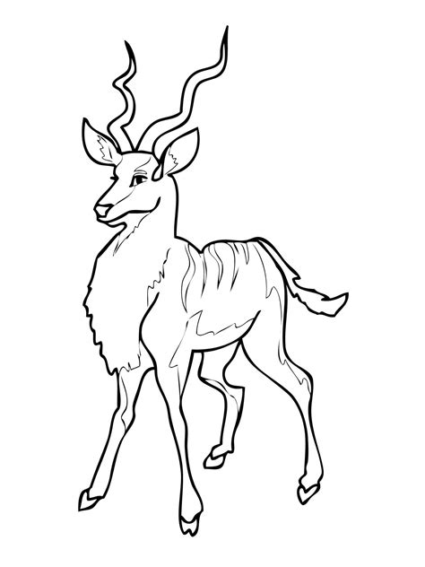 antelope coloring pages    print