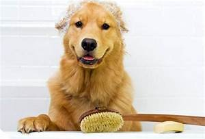 the animal keeper san diego pet boarding grooming day With dog boarding and grooming