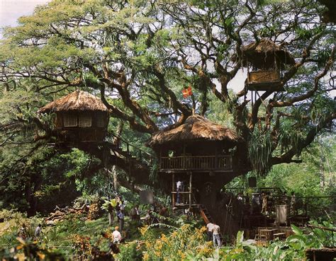 house trees the art of children s picture books tree houses