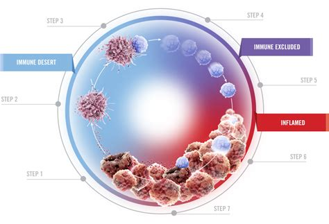 Research in Cancer Immunity Targets | BioOncology