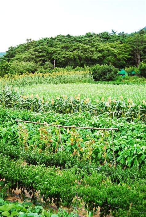 organic farming  korea beating pesticides parasites