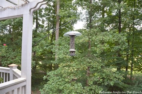 how to keep a squirrel from eating all the bird seed from