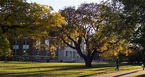 Seven straight years: University recognized as Tree Campus ...