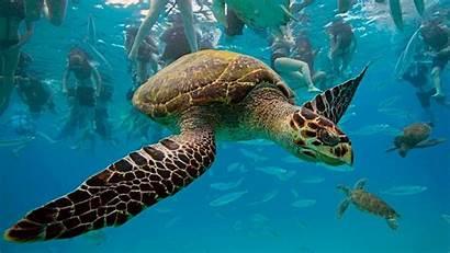 Turtle Desktop Background Backgrounds Wallpapersafari