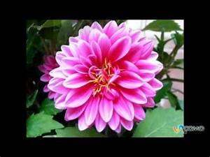 Flores de Invierno YouTube