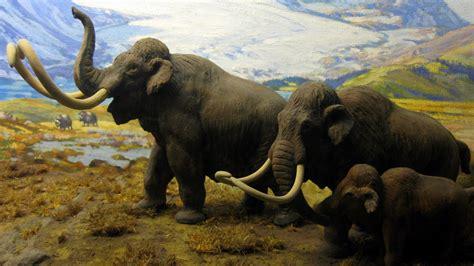 wallpaper north american mammals mammoths hd animals