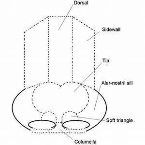 File Rhinoplasty