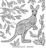 Coloring Kangaroo Adult Pages Wallaby Shutterstock Vector Australian Illustration Animal Colouring Adults Aboriginal Kangaroos Animals Mandala Royalty Macropodidae Mandalas Drawing sketch template