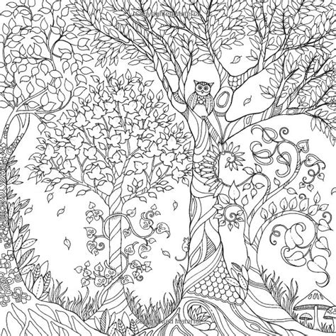 forest coloring pages 12 pics of enchanted forest coloring book pages owl