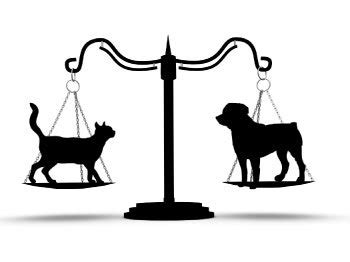 pet laws  st louis lawyers takes  rights  animals