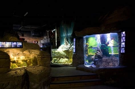 aquarium sea val d europe tarif aquarium sea val d europe photo de seine et marne n 176 3977