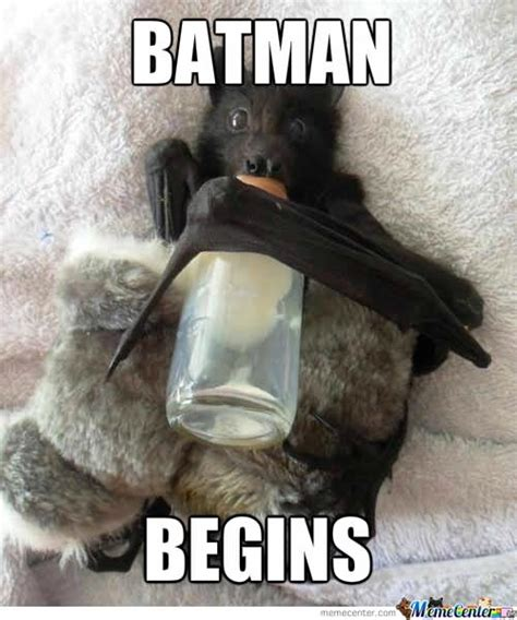 Bat Meme - batman begins funny bat meme image