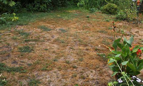 Vertrockneten Rasen Retten by Rasen Verbrannt Selbst De