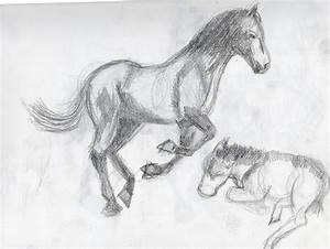 Britt's Graphics: Animal Drawing Practice: Horses