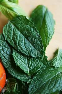 Kann Man Minze Einfrieren : minze das aromatische heilkraut im eigenen garten plantura ~ Lizthompson.info Haus und Dekorationen