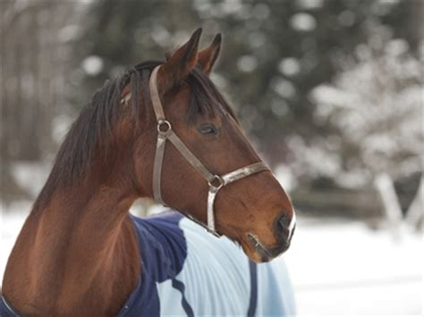 Op Versicherung Pferd Vergleich