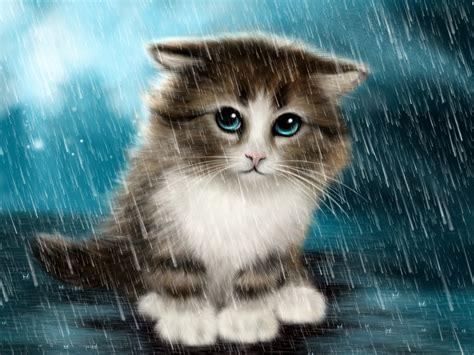 Cute Cat In Rain Wallpaper New Hd Wallpapers  Litle Pups